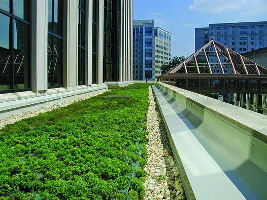 green roof substrates, air pollution trapped in green roofs, water contamination from green roofs, journal of environmental pollution, Andrew Speak, high levels of heavy metal, green sponges for pollution