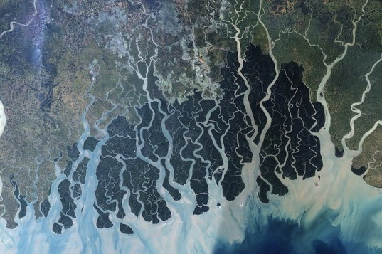 Bangladesh, mangrove forest, sundarbans, coal-fired power plant, bengal tiger, rampal power plant, energy creation, climate change, carbon sink, carbon sequestration