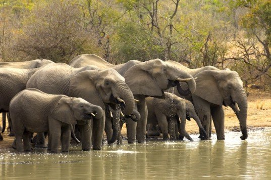 the illegal and legal process of elephant poaching It's now illegal to process or sell elephant ivory in china  all governments that  currently have legal domestic ivory markets, samper added, to.