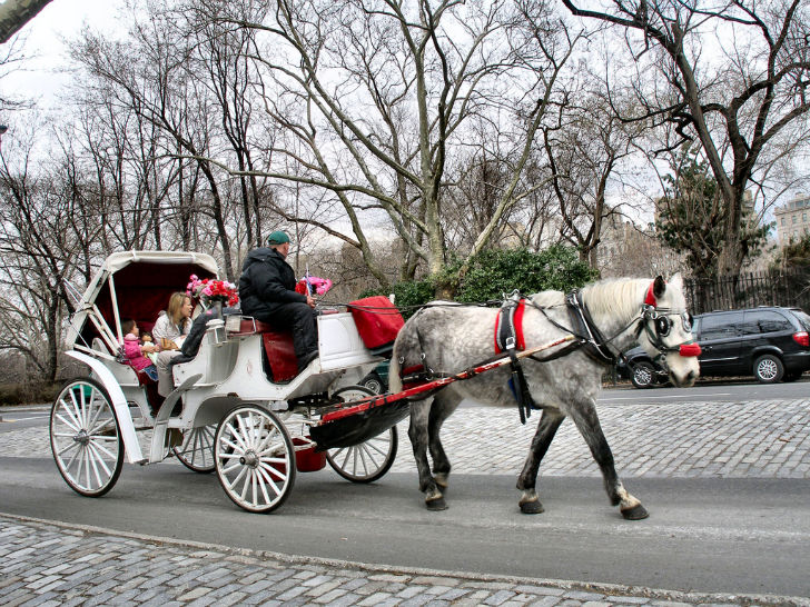 bill de blasio says it s over for horse drawn carriages in central park inhabitat green. Black Bedroom Furniture Sets. Home Design Ideas