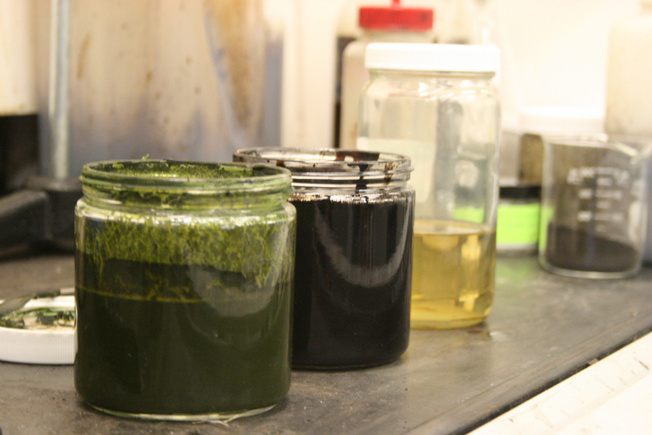 Scientists Convert Algae into Crude Oil in Less than One Hour
