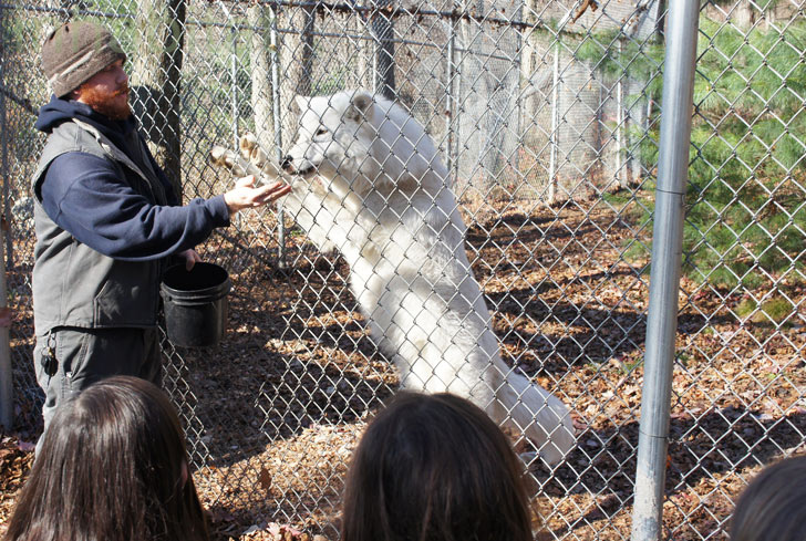 How to Find a Wolf Sanctuary Near You and Meet Some Wild Wolves!