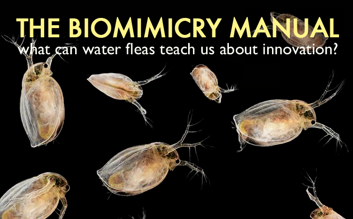 The Biomimicry Manual: What Can Water Fleas Teach Us About Innovation?