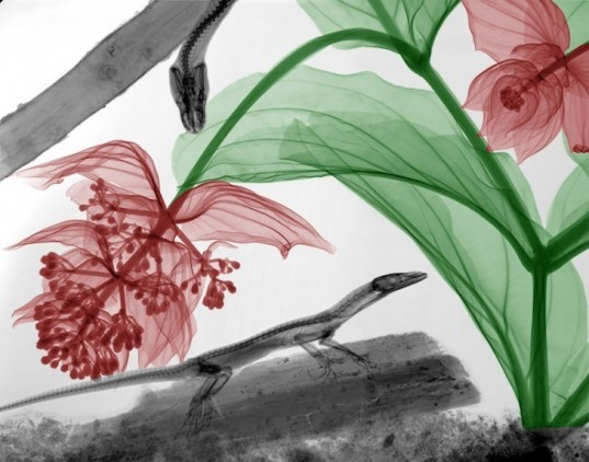 xray photography, Arie van 't Riet, xray art, xray imagery, xray images, xray energies, medical physicist, bioramas,