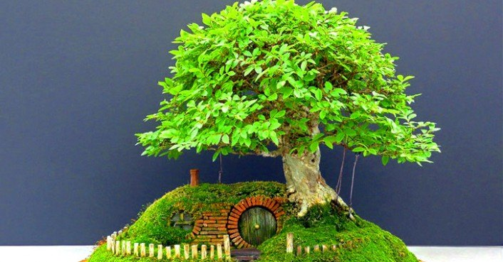 Amazing Bonsai Tree Hobbit Hole is Fit for Frodo Baggins Himself