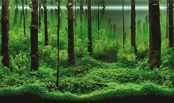 Mind Blowing Aquariums Look Like Underwater Forests Deserts And Gardens