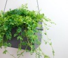 Opus Garten's Hangen Wall Planter Makes It Easy to Grow Greens Indoors Year-Round