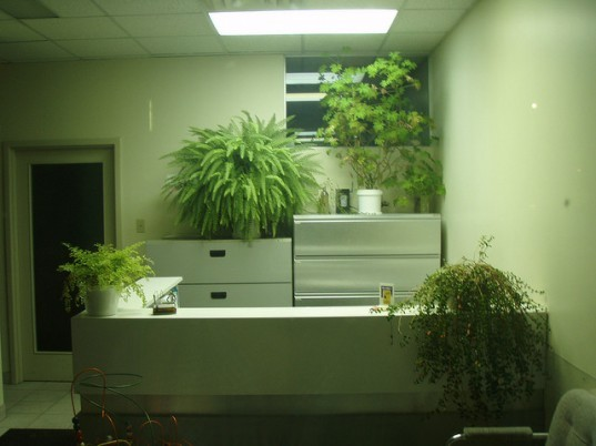 office plants, feng shui, plant therapy, pot plants, university of michigan, attention restoration, desk plants