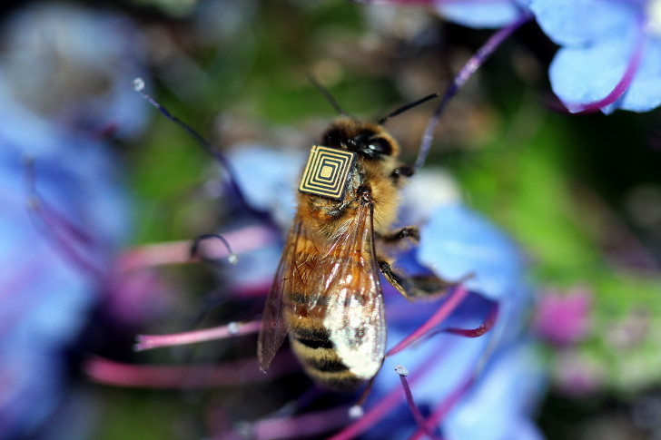 5,000 Honeybees Strap On Backpacks in the Name of Science