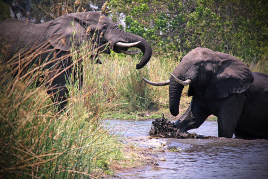 China destroys over 6 tons of ivory in Dongguan, International Fund for Animal Welfare, China destroys $10 million worth of ivory, China is world's biggest market for elephant tusks, illegal ivory trade in China, Chinese black market, China's ivory stockpile, Chinese conservations efforts,