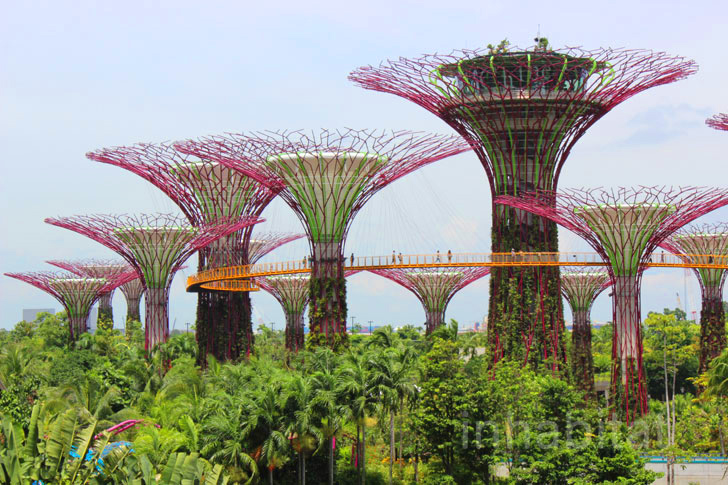 Photos Walk Atop The Treetops At Singapore 39 S Gardens By