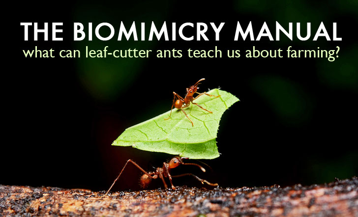 The Biomimicry Manual: What Can Leaf-Cutter Ants Teach Us About Food Systems?