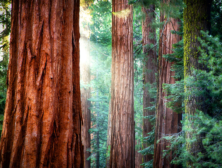 Scientists Discover Older Trees are Better at Absorbing Carbon
