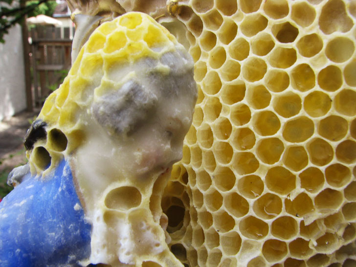 Uses For Natural Honeycomb