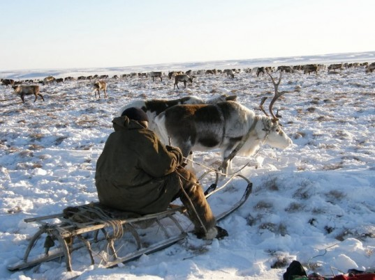 Finland, reindeer, fiddish reindeer protection program, glow in the dark reindeer, Reindeer Herders' Association, glowing reindeer, animal protectio