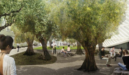 Diller Scofidio + Renfro, hood design, the broad art museum, los angeles, public plaza, outdoor plaza, landscaped plaza, Barouni olive trees, bunker hill, Bill Chait