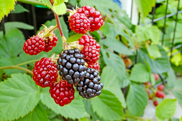6 Edible Plants You Can Forage for in New York City