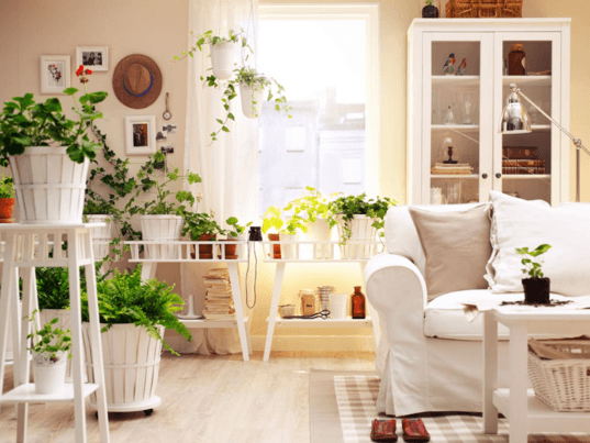 3 Houseplants To Help You Feng Shui Your Home For Spring   Inhabitat    Green Design, Innovation, Architecture, Green Building