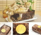Grow Yummy Shiitakes at Home with the CTAKEO Mushroom Growing Kit