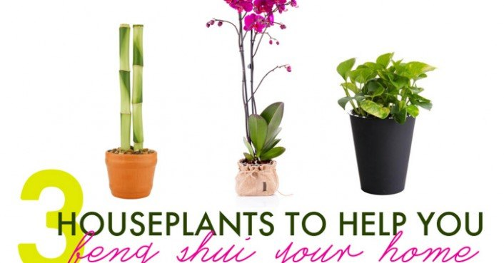 office feng shui plants. 3 houseplants to help you feng shui your home for spring inhabitat green design innovation architecture building office plants n