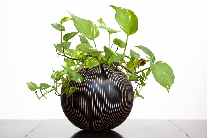3 Houseplants To Help You Feng Shui Your Home For Spring Inhabitat