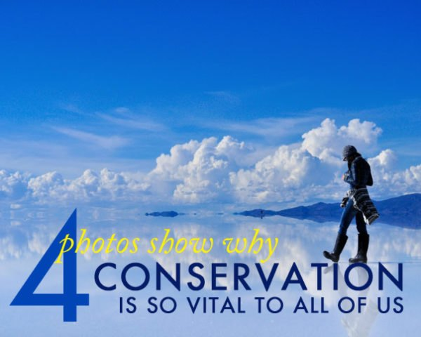 Conservation, environmental protection, deforestation, pollution, habitat loss, endangered species