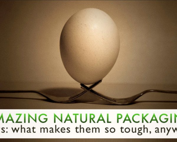 packaging the future, starre vartan, egg design, egg inspiration, how eggs are structured, learning from egg design, eggs as packaging, green packaging, natural packaging, eggs as natural packaging, what gives eggs strength, egg shape