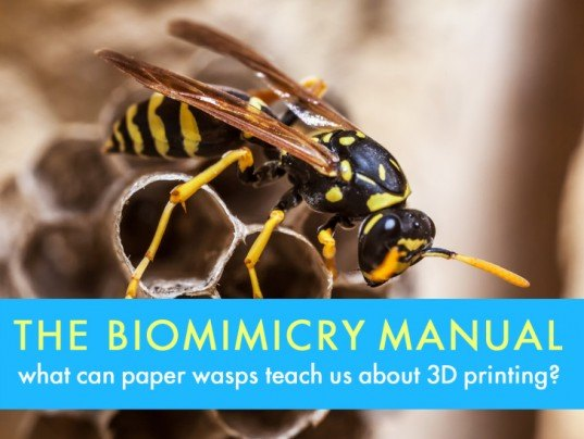 Paper wasps, wasps, paper, 3D printing