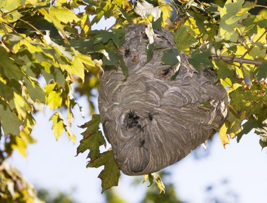 How Can I Stop Wasps From Building A Nest