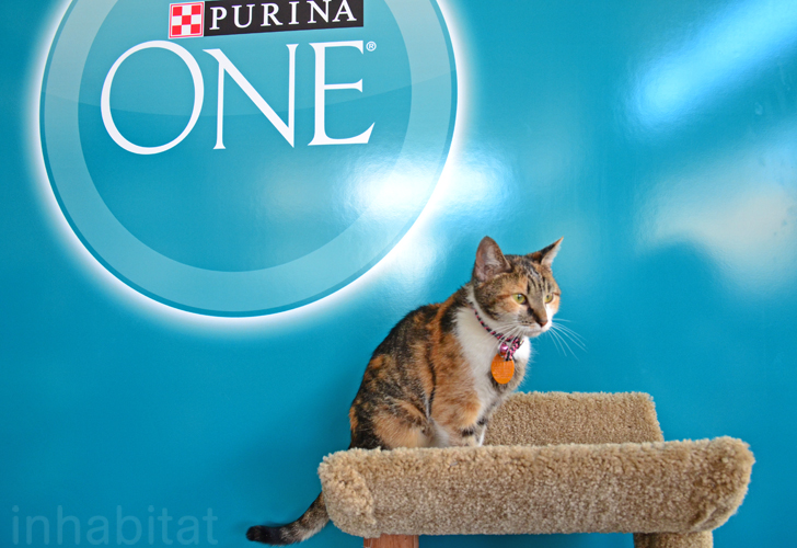 Purina Cat Cafe In Nyc
