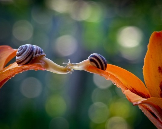 Vyacheslav Mishchenko, snails, ants, insects, macro, macro photography, nature photography