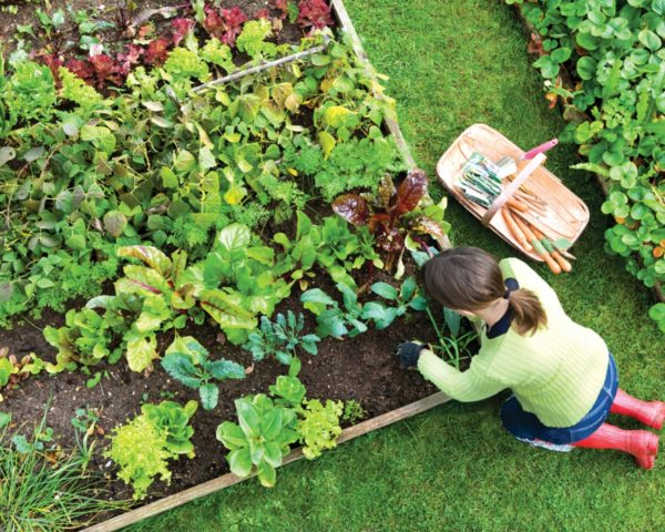 Edible estate, edible landscaping, food forest garden, garden, gardening, food not lawns