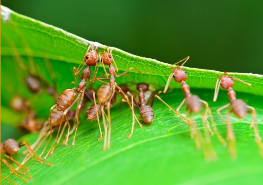 Ants, weaver ants, biomimicry, 3D printing