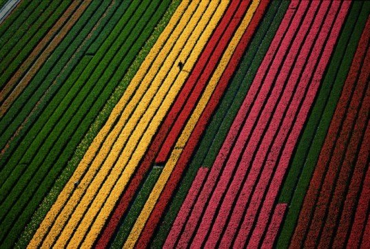 earth day, Yann Arthus-Bertrand, aerial photography, aerial photographs, Yann Arthus-Bertrand photography, earth day photography, landscapes, climate change, new caledonia, heart voh, mangrove swamps, aerial imagery, Yann Arthus-Betrand aerial photography,