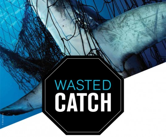 bycatch, oceana, seafood, environmental destruction, ocean, water issues, animals, ocean life, environmental issues, shrimp, salmon, fish, ocean wildlife, by-catch
