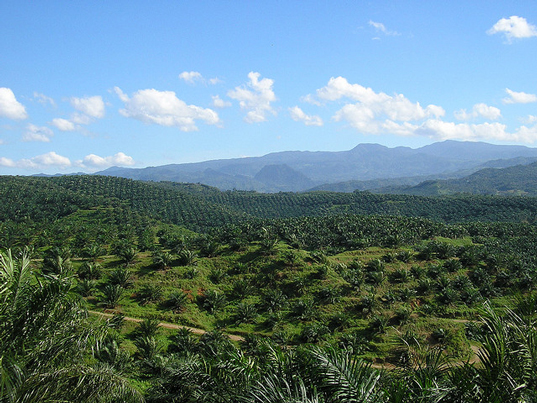 Honduran Palm Oil Cooperative Named World's Most Sustainable by Rainforest Alliance