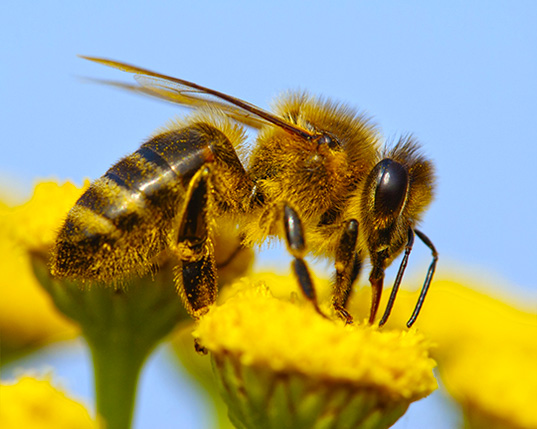 Environmentalists Sue US Government to Get Bees Listed as Endangered Animals