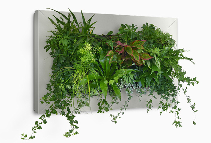 Suite plants livepicture framed wall planter inhabitat for Decoration murale verticale