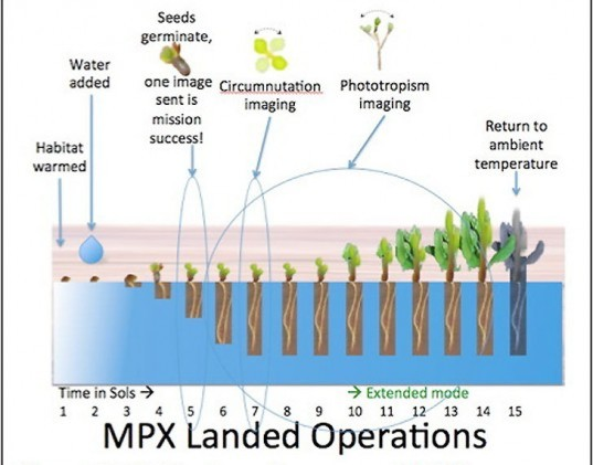 Mars Plant Experiment (MPX), NASA Mars rover, mars rover, Nasa technology, nasa mars plant growth, mars plant growth, greenhouses, food in space, green technology, NASA technology, NASA mission