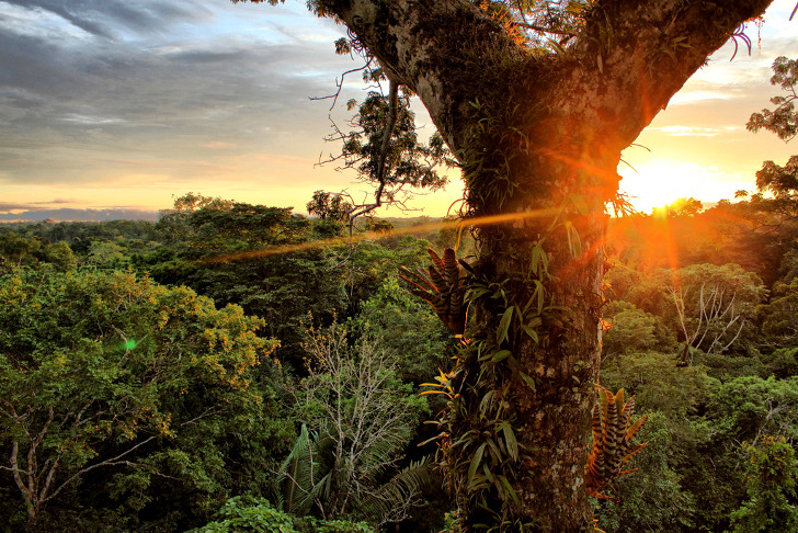 amazon rainforest issues Ecuador's government yesterday issued oil drilling permits for the yasuni reserve , a un listed biosphere reserve in the western part of the country despite calls for a referendum on the issue and a failed international fundraising campaign to keep the oil in the ground, production could begin as soon as.