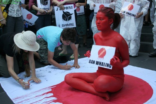 japanese, whaling, whale, hunt, protest,