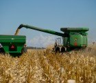 Climate Change Could Cripple American Corn Industry, New Report