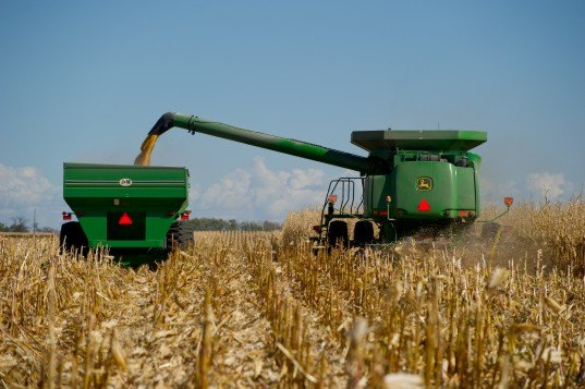 corn, harvest, drought, climate change, industry, industrial,