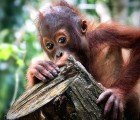 The Sixth Mass Extinction of Fauna and Flora is Imminent, Duke University Study Reveals