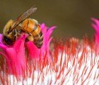 President Obama Announces Plan to Save the Bees (and Other Pollinators Too)!