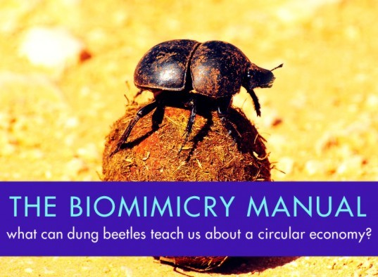 The Biomimicry Manual: What Can Dung Beetles Teach Us About the Circular Economy?