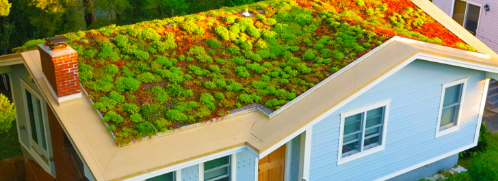 Recover Greenroofs, living roof, bio-architecture, urban agriculture, Boston urban farm, rooftop farm, living walls, passive cooling,