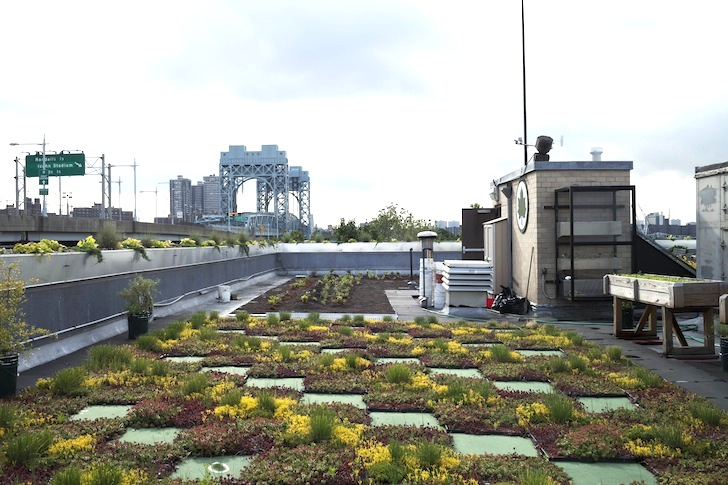 5 Borough Building Green Roof NYC Parks Department « Inhabitat U2013 Green  Design, Innovation, Architecture, Green Building