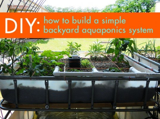 DIY: Everything You Need to Know to Build a Simple Backyard Aquaponics System