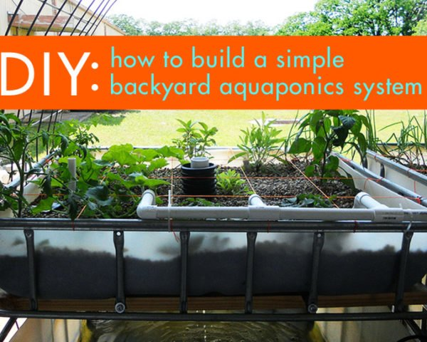 DIY: Everything You Need to Know to Build a Simple Backyard ... on pond garden designs, diy garden designs, indoor aquaponics system designs, indoor garden designs, best aquaponic designs, backyard garden designs, berry garden designs, aeroponic garden designs, hydroponic garden designs, aquaculture garden designs, green garden designs, aquaponic diy designs, art garden designs, organic garden designs, greenhouse designs, for backyard aquaponic designs,